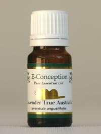 E-Conception.org アロマの部屋 本日のイチオシ ラベンダー・トゥルー精油
